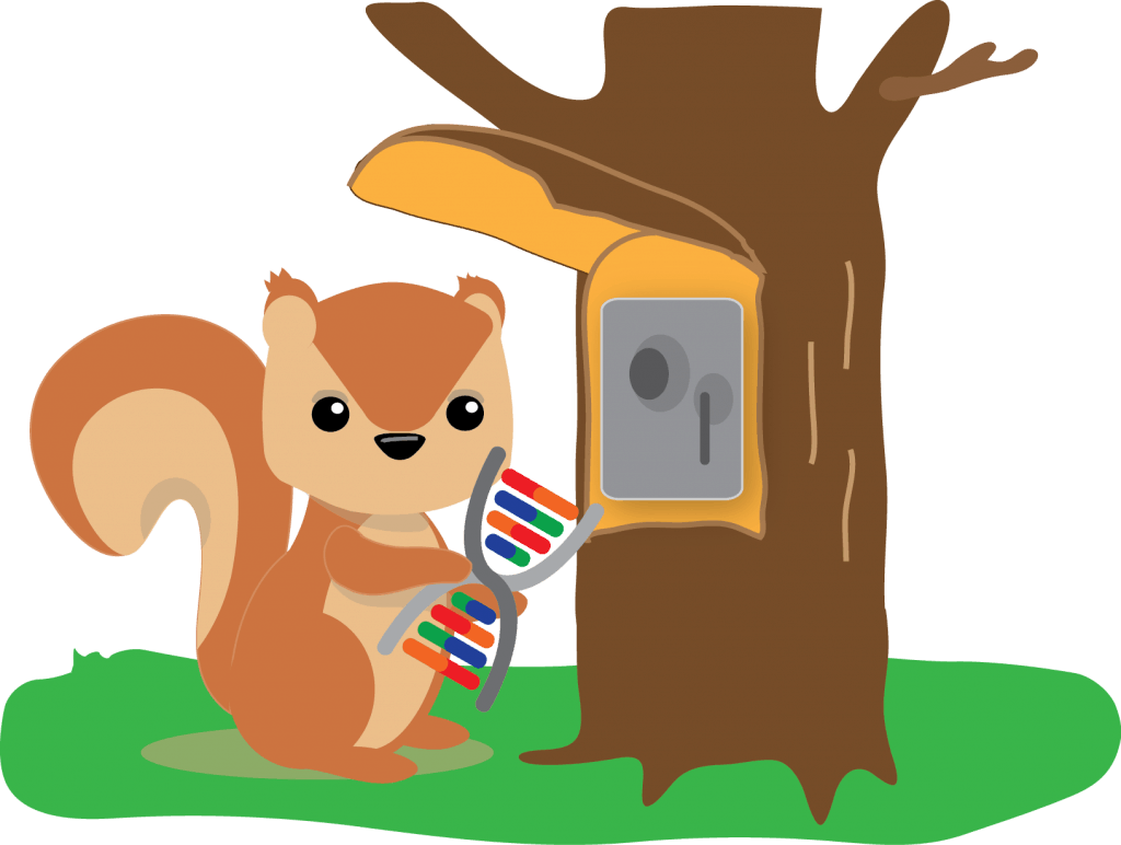 Squirrel putting DNA in a safe as an analogy for protecting your genetic privacy